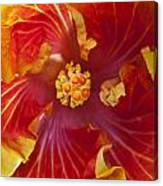 Hibiscus Center Canvas Print
