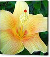 Hibiscus Hip Canvas Print