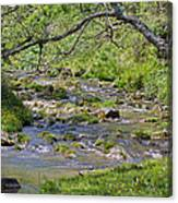 Hidden Creek Canvas Print