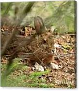 Hidden Hare Canvas Print