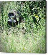 Hiding In Tall Grass Canvas Print