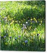 High Meadow Flowers Canvas Print