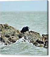 High Tide Canvas Print