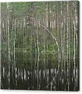 High Waters In A Forest Of Evergreens Canvas Print