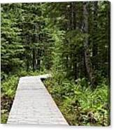 Hiking Trail Canvas Print