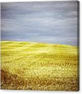 Hills Of Gold Canvas Print