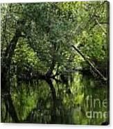 Hillsborough River Reflections Canvas Print