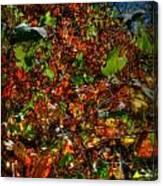 Hillside Colors Canvas Print