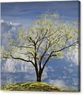 Hilltop Canvas Print
