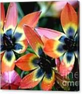 Hippie Tulips Canvas Print
