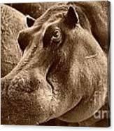 Hippo Of Khwai Canvas Print