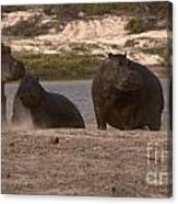 Hippos And Baboons Canvas Print