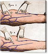 Historical Illustration Of Blood Vessels Canvas Print