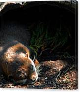 Hit The Otter Snooze Canvas Print