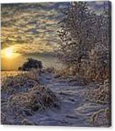 Hoar Frost Covered Trees At Sunrise Canvas Print
