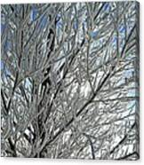 Hoar Frost Canvas Print