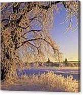 Hoar Frost On Tree, Milton, Prince Canvas Print