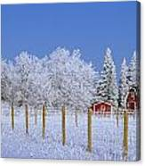 Hoarfrost On Trees Around Red Barns Canvas Print