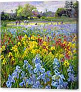 Hoeing Team And Iris Fields Canvas Print