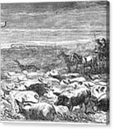 Hog Driving, 1868 Canvas Print