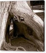 Hollow Tree Canvas Print