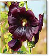 Hollyhock 7193 Canvas Print