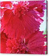 Hollyhock Duet Canvas Print