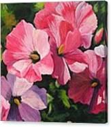 Hollyhocks In The Sunshine Canvas Print