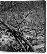 Holy Tree Canvas Print