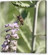 Honey Bee In Flight On Lavender Canvas Print