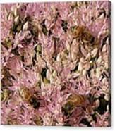 Honey Bees At Work Canvas Print