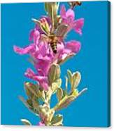 Honey Bees On Sage 1 Canvas Print