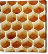 Honey In Wax Honeycomb Cells Canvas Print