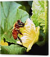 Honeybee And Cantalope Canvas Print