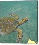 Honu Waters Canvas Print