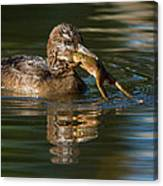 Hooded Merganser And Bullfrog Canvas Print