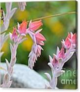 Hooked On Pink Canvas Print