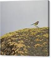 Hopping Blue Bird Canvas Print