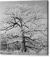 Horizontal Branches Bw Canvas Print