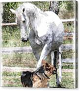 Horse And Dog Play Canvas Print