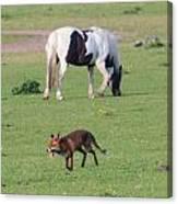 Horse And Fox Canvas Print