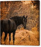 Horse And The Haystack Canvas Print