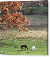 Horse Barn Hill Pasture Canvas Print