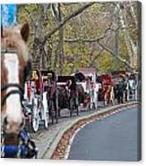 Horse-drawn Carriages Canvas Print