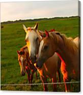 Horse Family Soft N Sweet Canvas Print