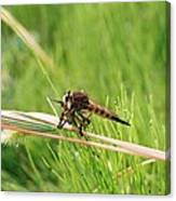 Horse Fly Close-up Canvas Print