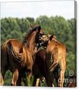 Horse Foul Play IIi Canvas Print
