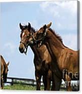 Horse Foul Play Vi Canvas Print