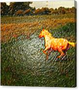 Horse Frolicking Canvas Print