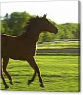 Horse Galloping Canvas Print